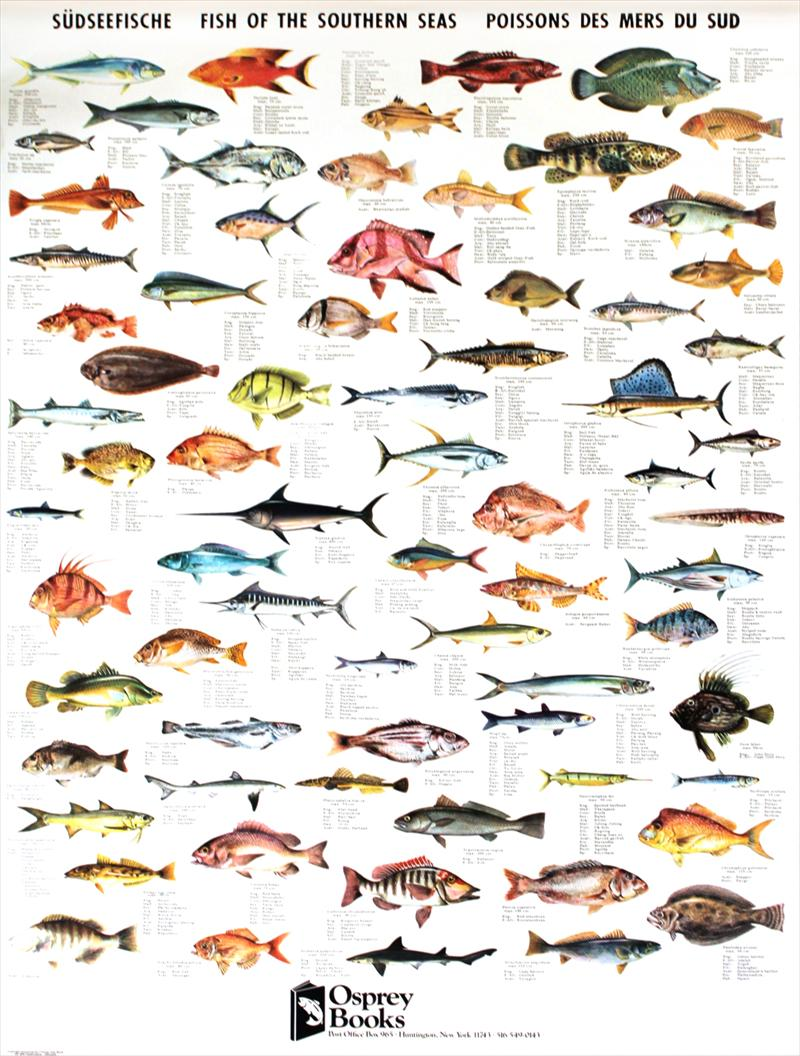 iGavel Auctions: Six Fish Posters, Osprey Books, New York/Denmark ...: bid.igavelauctions.com/Bidding.taf?_function=detail&Auction_uid1...